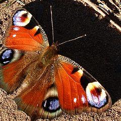 """фото """"бабочка"""""""