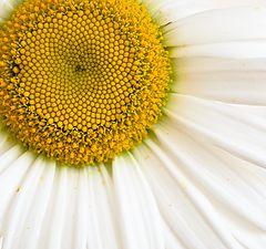 """фото """"Желтый круг"""""""
