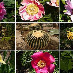 "фото ""Botanical Garden - Montreal"""