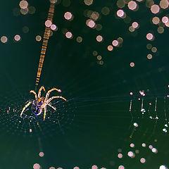 """photo """"Constellation Spider"""""""