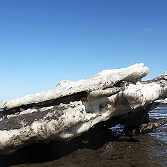 """фото """"Льдинки Карского моря."""""""