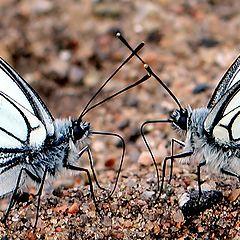"""фото """"Бабочки."""""""