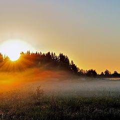 "фото ""Июньским туманным утром."""