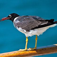 """фото """"Gull"""""""