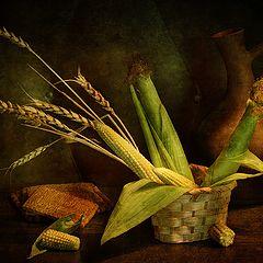 "фото ""С кукурузой и колосьями"""