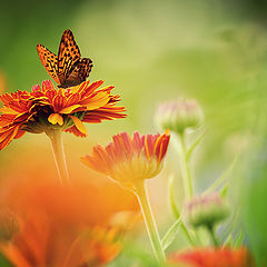 "фото ""Sommerparadies"""