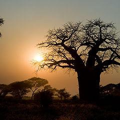 "фотоальбом ""Африка"""