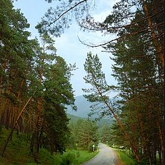 """photo """"On Altay's roads"""""""