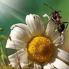 "фото ""Путешествие муравья"""