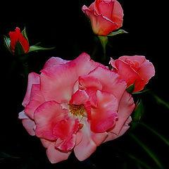 """фото """"""""Roses..."""""""""""