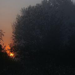 "photo ""Hiding the sun"""