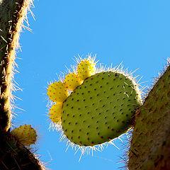 """фото """"""""Cactus..."""""""""""