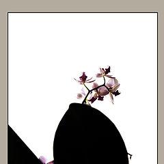 "photo ""нежна орхидея..."""