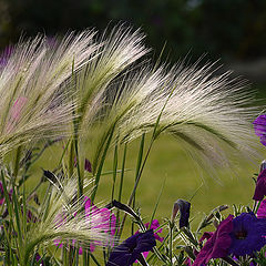 """фото """"Ковыль, трава не только степная"""""""