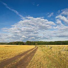 "фото ""А ты все та же - лес, да поле, да плат узорный до бровей..."""