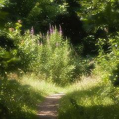 "фото ""Летний день в лесу"""