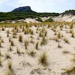 """фото """"Dunes..."""""""