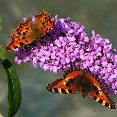 """фото """"Осенние бабочки"""""""