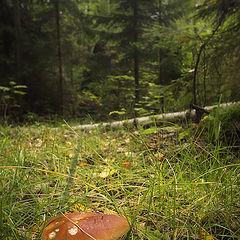 """фото """"В лес за грибами"""""""