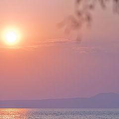 """фото """"Таяла веточка в нежных красках восхода"""""""