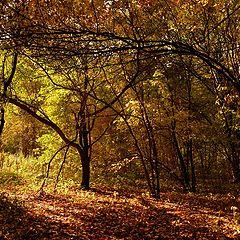 """photo """"Gold autumn"""""""