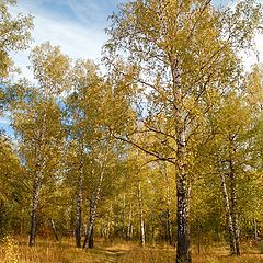 """photo """"In autumn forest"""""""