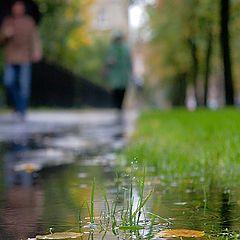 "photo ""Walking in autumn ..."""