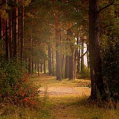 "photo ""Autumn begins"""