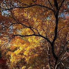 """photo """"Autumn light"""""""