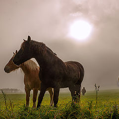 "photo ""Horses in a foggy morning"""