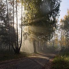 "фото ""Лучистым утром"""