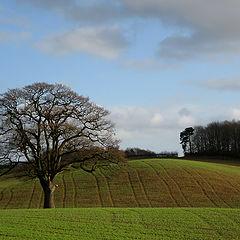 "фото ""Lonely Tree"""