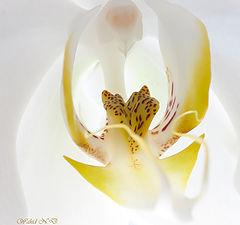 """album """"Floral"""""""