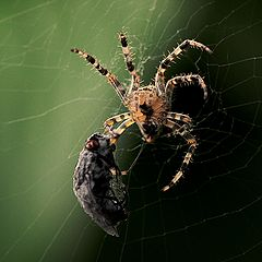 "photo ""Happiness for Spider"""