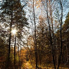 """photo """"Autumn forest colors"""""""