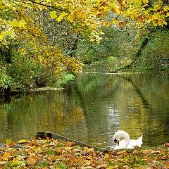 """фото """"Autumn1"""""""