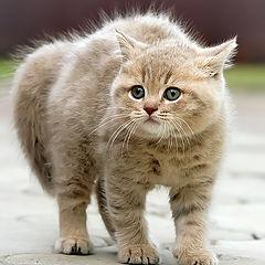 "photo ""котенок"""