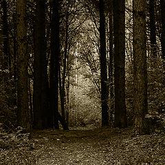 """album """"Black&White"""""""