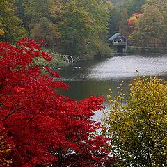 "фото ""Red tree"""