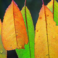 "фото ""Autumncolours"""