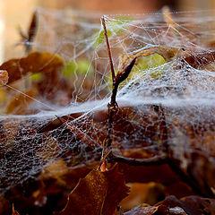 "фото ""Cobweb"""