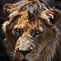 "фото ""The king"""
