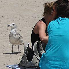 """photo """"a good company on the beach"""""""