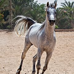 "фото ""Gallop"""
