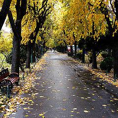 "фото ""Autumn has come"""