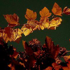 """фото """"Золотая Осень"""""""