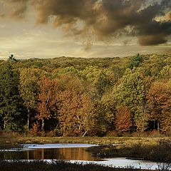 "фото ""Pine Swamp at Harriman State Park"""