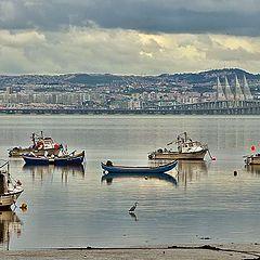 "фото ""River Tagus Estuary"""