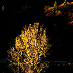 "photo ""yellow tree"""