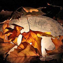 """photo """"The autumn pie"""""""
